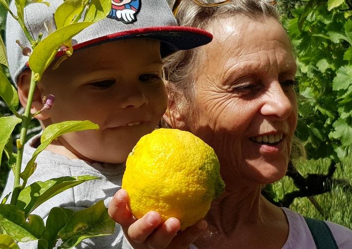 """absolut Bio - diese Zitronen vom Baum """"ein Erlebnis"""""""