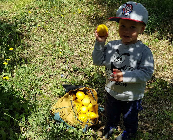Organic Zitronenernte