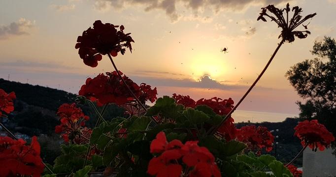 sunrise 5 / spider