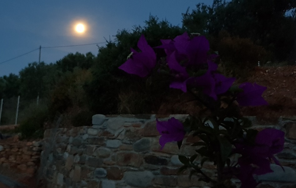 Full moon with bougainvillea