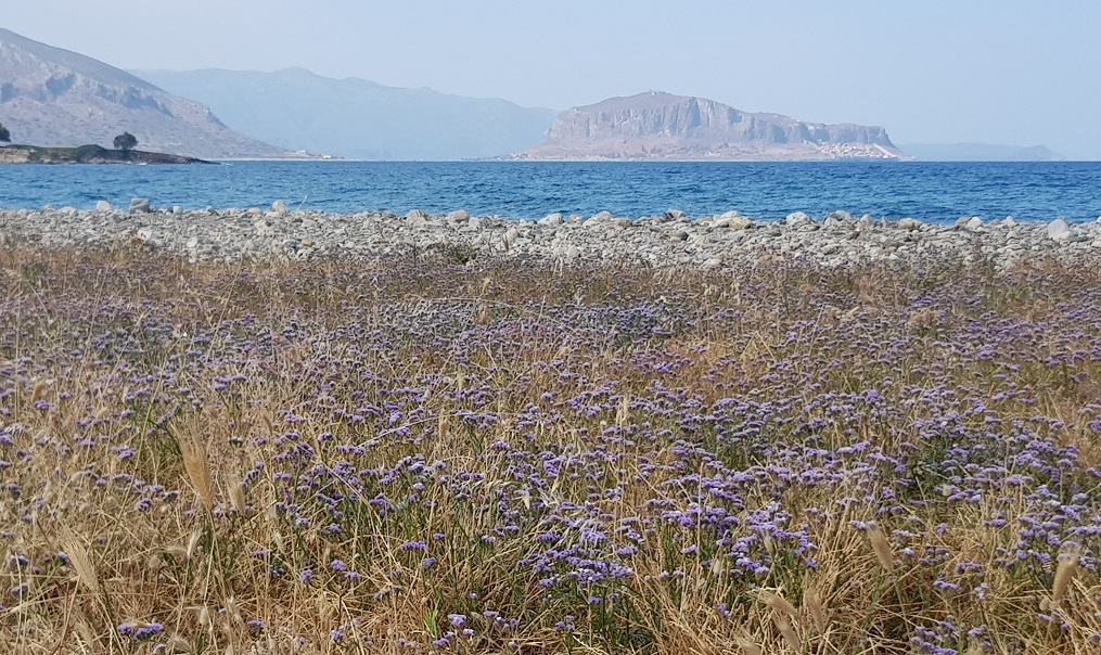 it blooms by the sea with a view of the Kastro Monemvasia