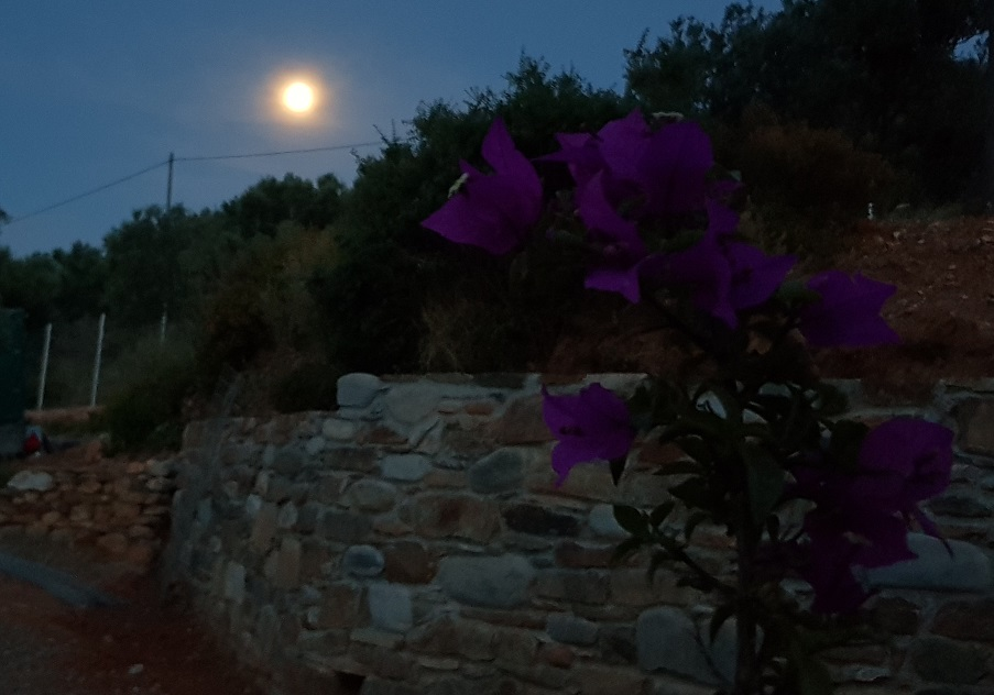 Full moon and bougainvillea