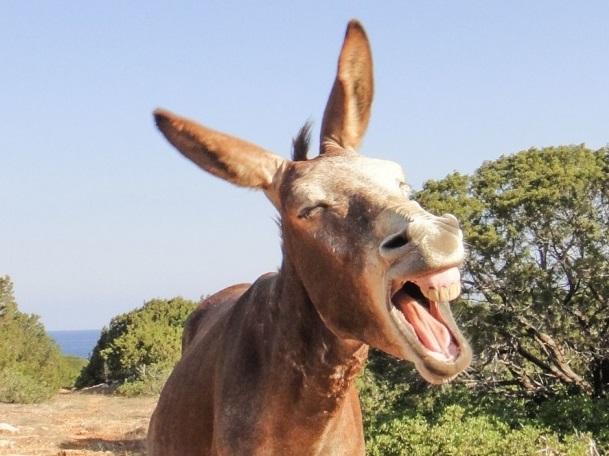 """dieses Foto ist aus tonight.de zum Artikel """"Mann rettet Esel und erleidet mehrere Stromschläge"""""""