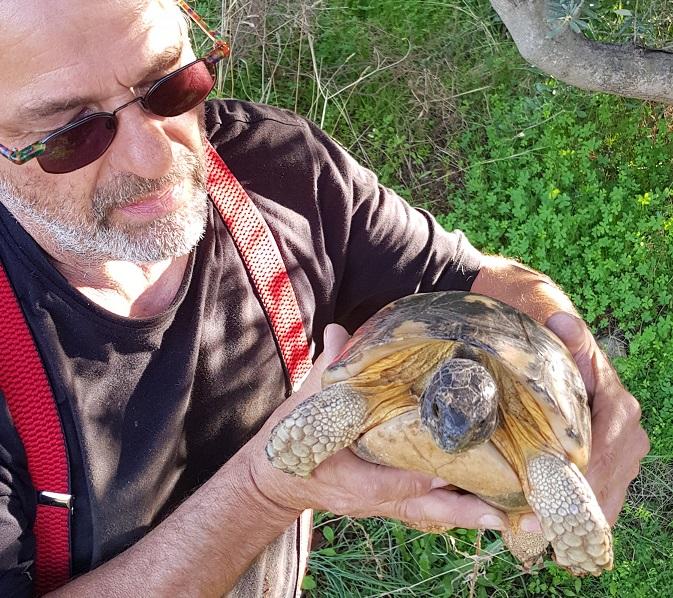 inzwischen Zutraulich Momo (unsere freilebende griechische Landschildkröte) ca. 40 Jahre alt, kommt immer wieder bei uns vorbei