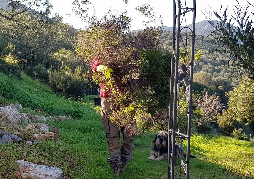 Buschmonster mit Hund :)